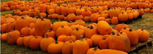 pumpkin-banner